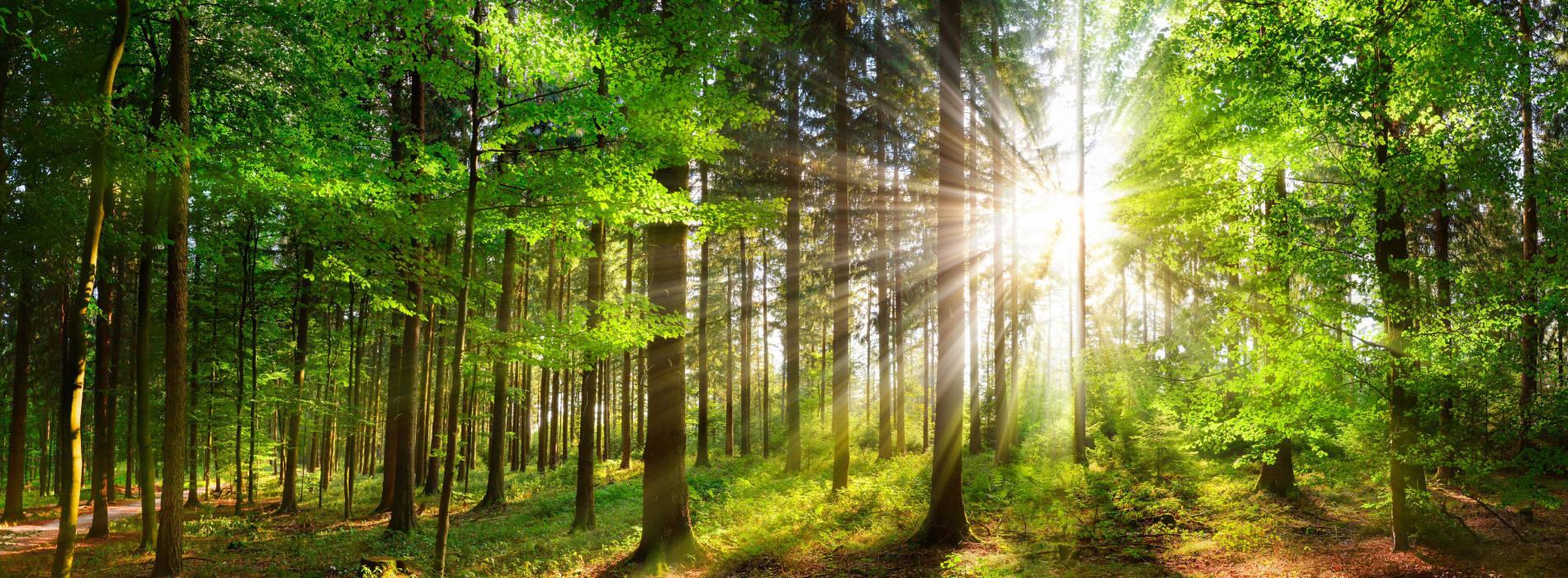 Ingenieurbüro für Forst- und Holzwirtschaft und Gewerbe für Holzschlägerung, -bringung und -zerkleinerung.